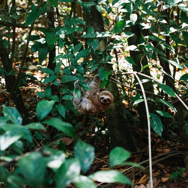 Lost Found Keep - Costa Rica - Centroamérica