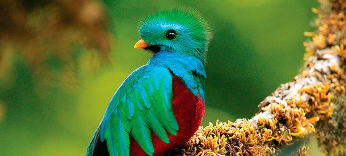 Biodiversity - Central America