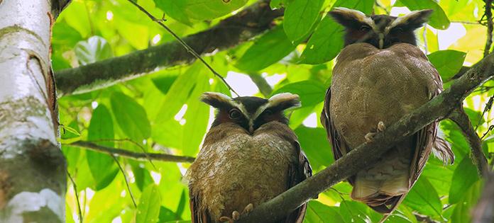 Vogelarten - Nationalpark