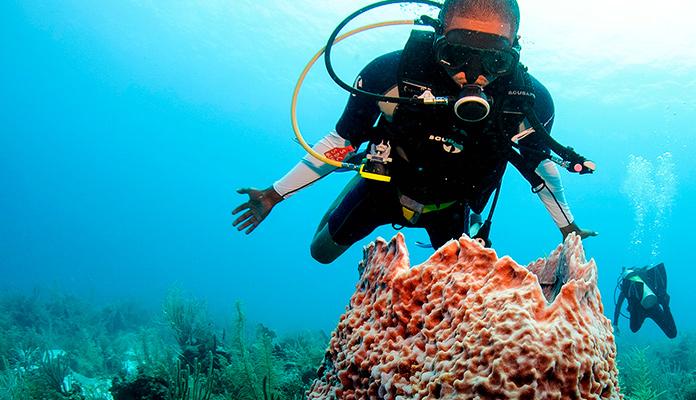 Coral - Belice - Centroamérica