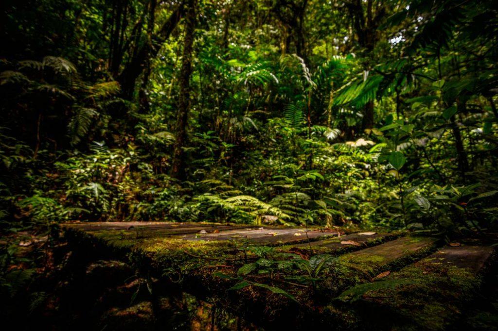 Bosque Nuboso Monteverde/Costa Rica