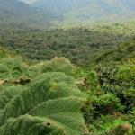 cinco bosques centroamérica