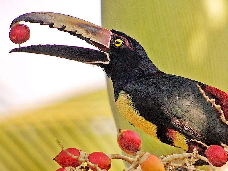 Conoce Costa Rica en Centroamérica