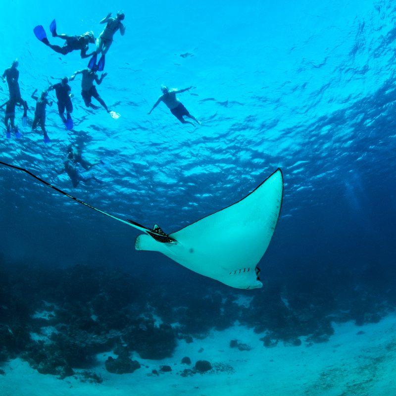 Patrimonio de la Humanidad, Arrecifes de Belice