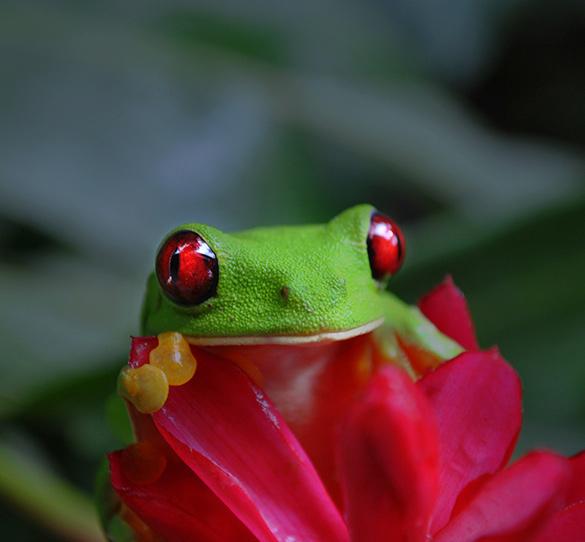 Naturaleza y ciudades coloniales en Costa Rica y Nicaragua