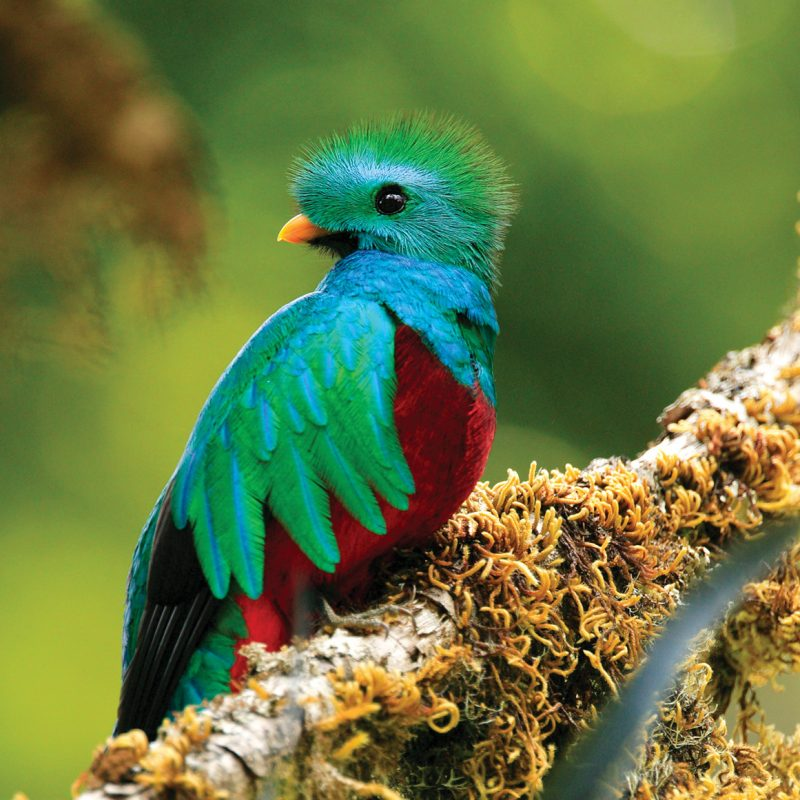 Biodiversity and fauna in Costa Rica