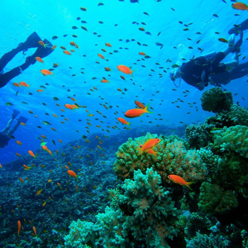 Corals in Honduras
