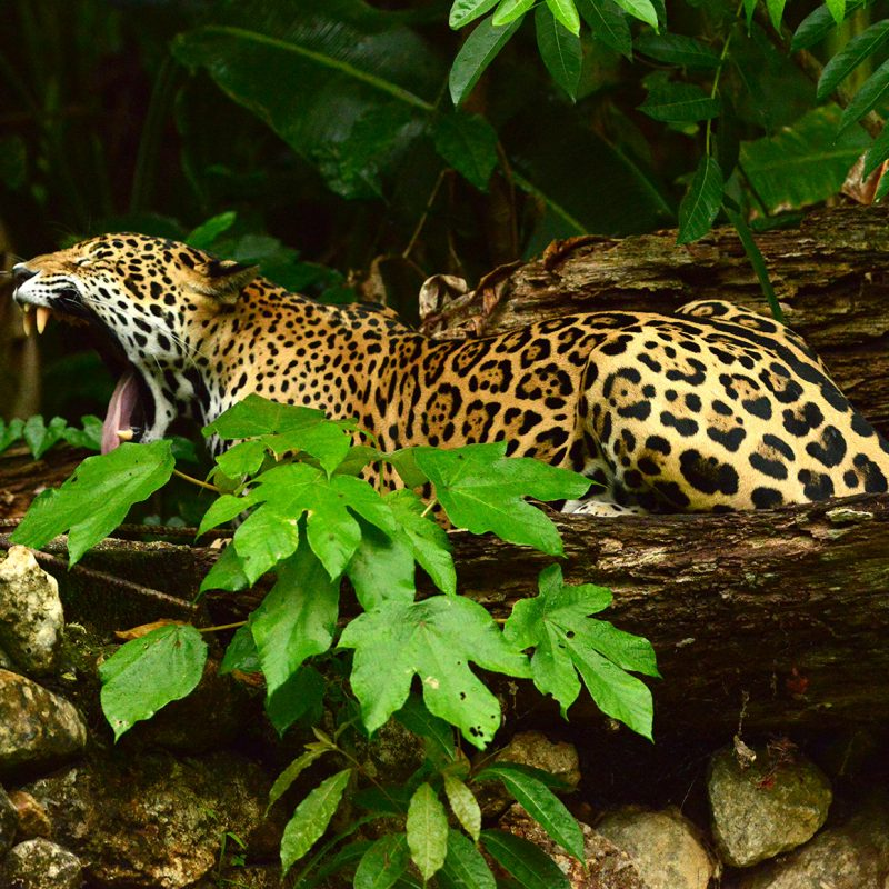 Fauna and biodiversity in Belize