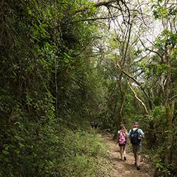 Centra America. Cerro Verde in El Salvador