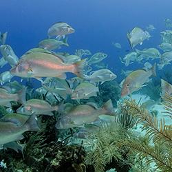 Central America. Barrier Reef in Belize