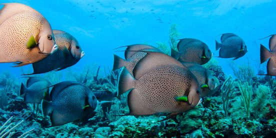 Gran Barrera de Coral de Belice, Patrimonio de la humanidad