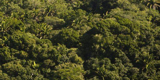 Reserva Natural Blanden en Belice, un pulmón mundial