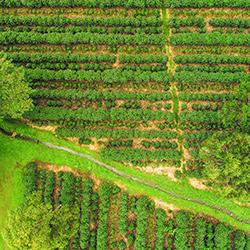 Central America. Providencia San Gerardo in Costa Rica