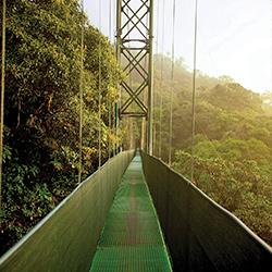 ver centroamerica costa rica bosque nuboso monteverde
