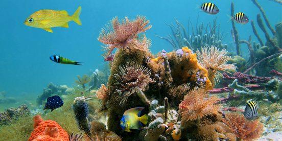 ver centroamerica costa rica parque nacional isla del coco