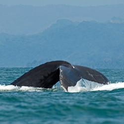ver centroamerica costa rica parque nacional marino ballena