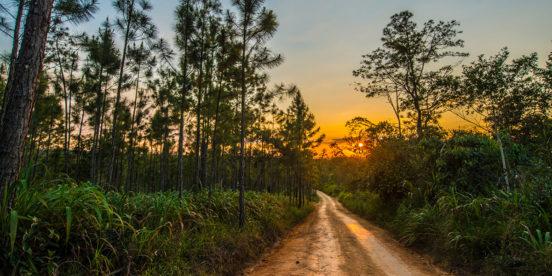 Mountain Pine Ridge, nature in Belize