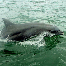 Dolphin watching in Panama, Central America