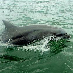 Disfruta del avistamiento de delfines en Panamá