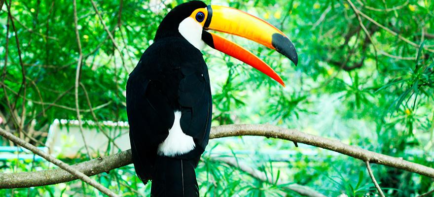 Avistamiento de aves Costa Rica, Nicaragua y Honduras