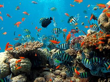 Caribe Maya - diversidad cultural