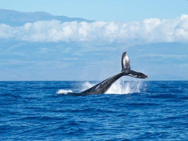 Animales más bellos del planeta - Centroamérica