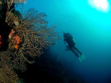 Diving - Central America