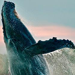 Panamá observación de ballenas experiencia inolvidable