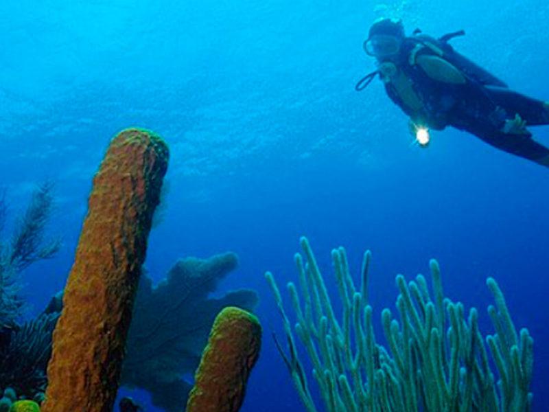 Belice - Submarinismo - Centroamérica